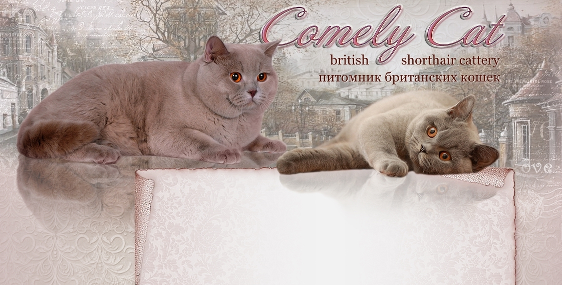 Comely Cat